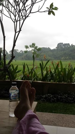 Overlooking the rice paddies from the balcony