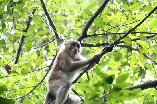 Good Times Travel - Day Tours: Erawan National Park
