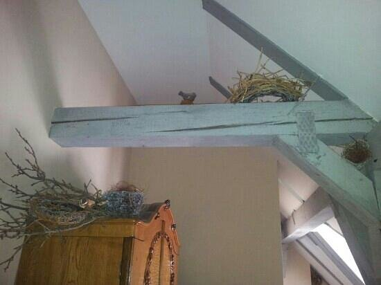 Conacul Archia : birds nest