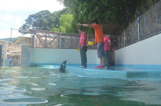 Awashima Marine Park: alimentando as focas