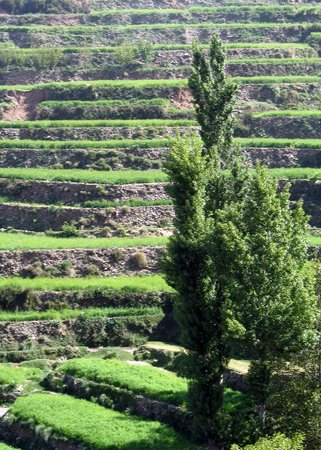 Morocco Mountain Guides- Day Tours: terraces of agriculture