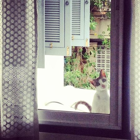 Baan Noppawong: Besuch am Fenster