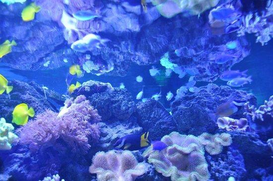 Oceanarium Sea Fairy Tale