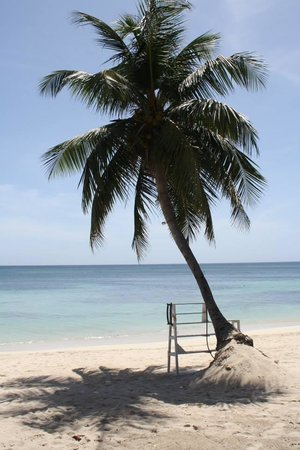 Coconut Tree II: Beautiful scenery