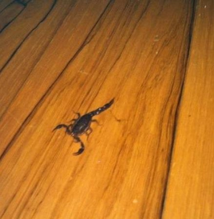Aska Mountain Mill Bed & Breakfast: Watch out for scorpions...