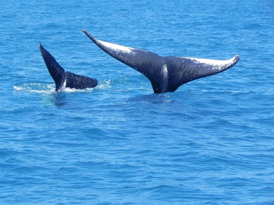 Maitei Hotel: Avistagem de Baleias na temporada de Julho a Outubro