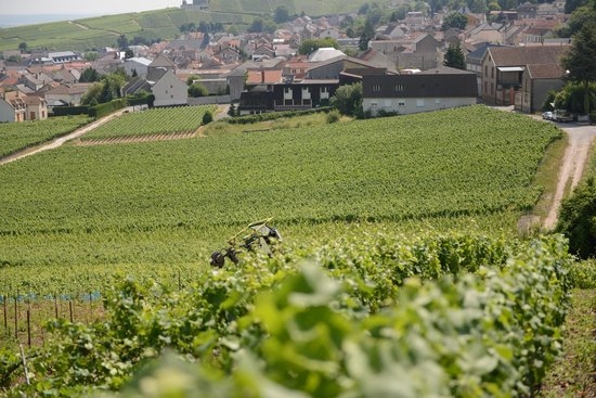 Chambres d'Hotes Pierre Trichet : Champagne Trail