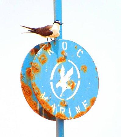 Kobar Island: Wildlife.