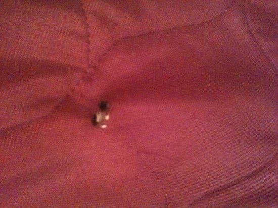 InTown Suites Greensboro Extended Stay Hotel: cigarette burn in comforter