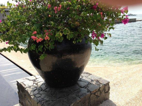 Abaca Boutique Resort: プールサイドのプランター