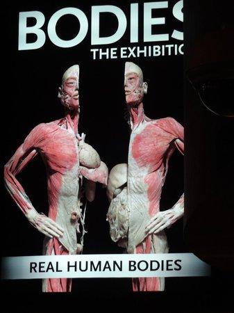 Bodies The Exhibition: Incrível!