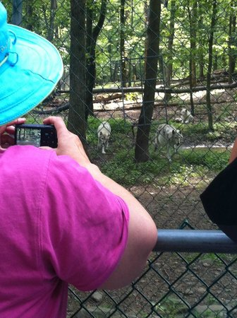 Camp Taylor: Wolf Preserve