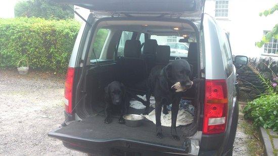 Horse & Farrier Inn : Scrumpy & Jack (Mystery shopper dogs !!)