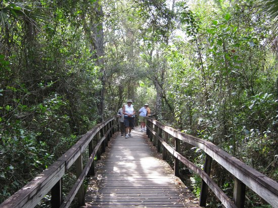 Fakahatchee Strand Preserve State Park & Boardwalk: The boardwalk