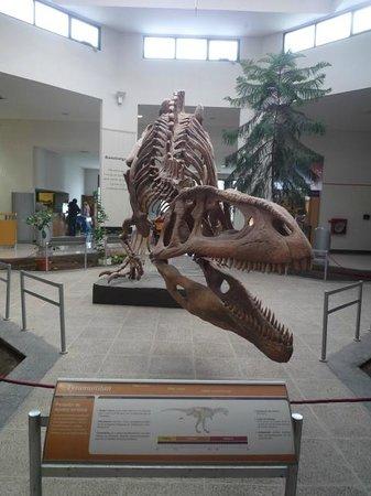 Museo Paleontologico Egidio Feruglio: Museo Paleontologico Trelew