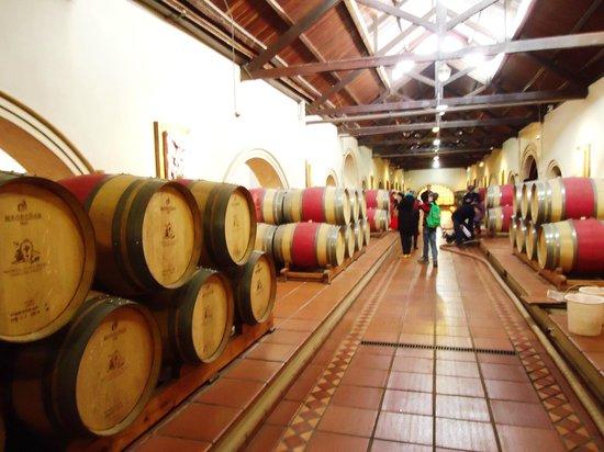 Bodega Luigi Bosca Familia Arizu: Barris com o liquido precioso