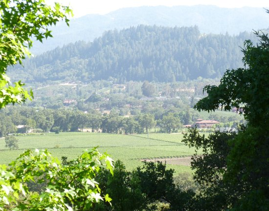 Rombauer Vineyards : The view from the porch