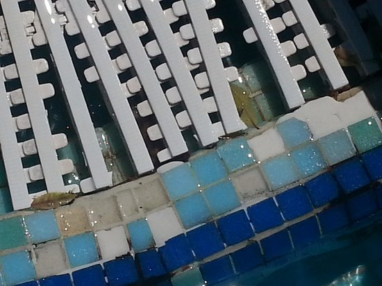 Isrotel Royal Garden: plastic broken in main pool