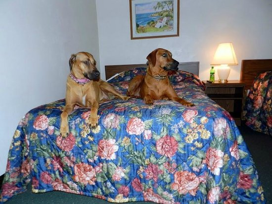 Boston Inn: Pets Welcome