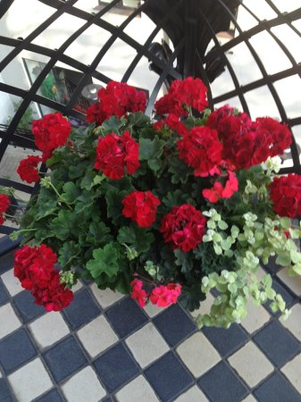 Hotel Bergs: Beautiful geraniums on our balcony