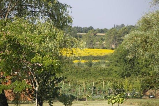 Hotel La Bastide d'Iris : View from breakfast