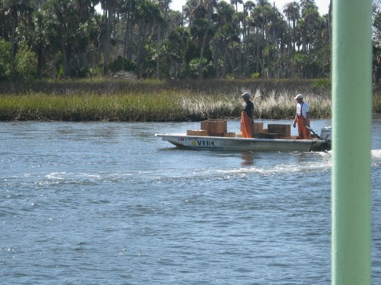 Crystal River Preserve State Park: Going Fishin