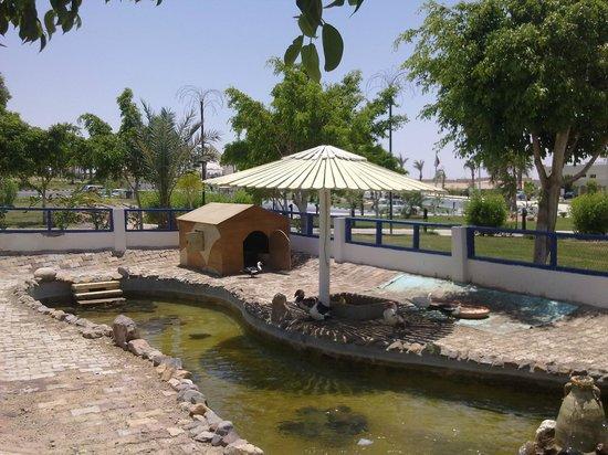 Coral Beach Rotana Resort Egypt Reviews