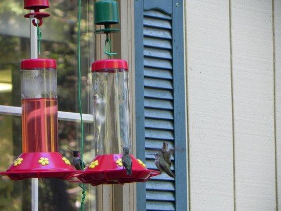 Highland House Bed & Breakfast: Hummingbird feeder