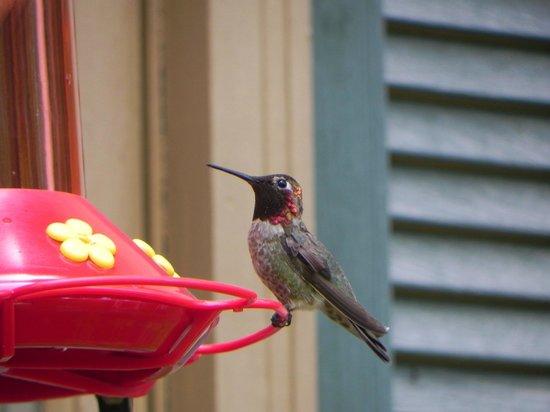 Highland House Bed & Breakfast: Hummingbird