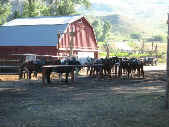 Spotted Horse Ranch : great horses