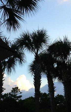 윈게이트 바이 윈덤 - 데스틴 플로리다 사진