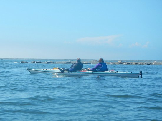 Dungeness Kayaking : The sun came out, and harbor seals entertained us as we returned from the Lighthouse.