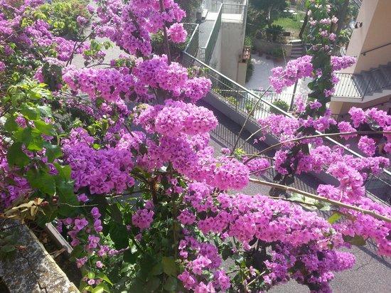 Hotel San Pietro: Bepflanzung
