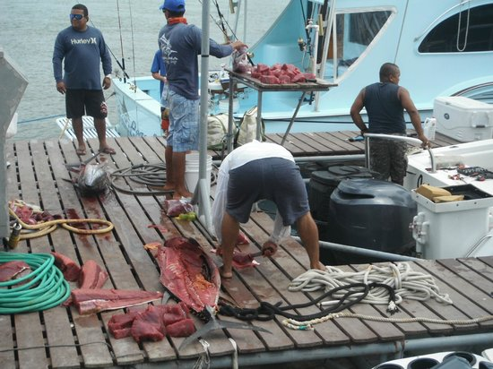 Panama Sport Fishing Lodge: Enough Tuna Meat for everyone!