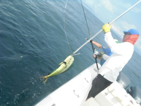 Panama Sport Fishing Lodge: Dorado