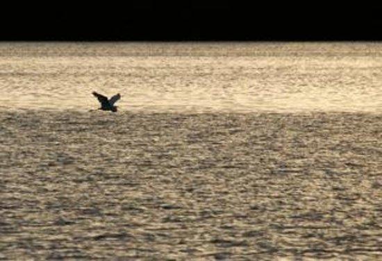 Tarpon Bay Explorers : Evening on the bay.