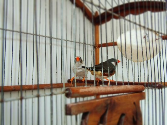 La Tangerina: Resident finches