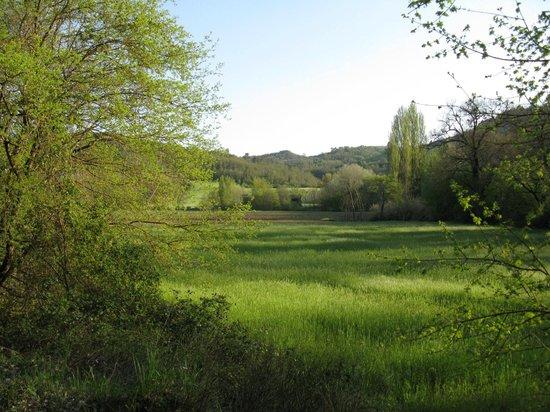 Borgovivo: Farmland adjoining Bogovivo Agriturismo