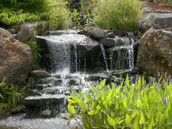 Oregon Garden : The water cascades down the rock formation