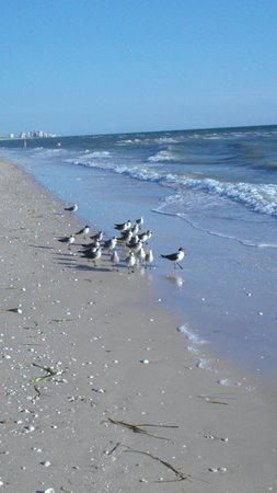 Birds Find It Peaceful Too Picture Of Barefoot Beach