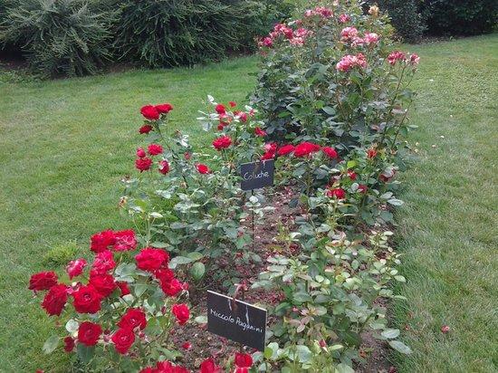 La Roseraie de Provins : jolies roses Coluche...