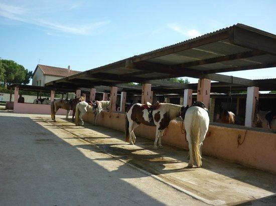 El Rancho: Chevaux