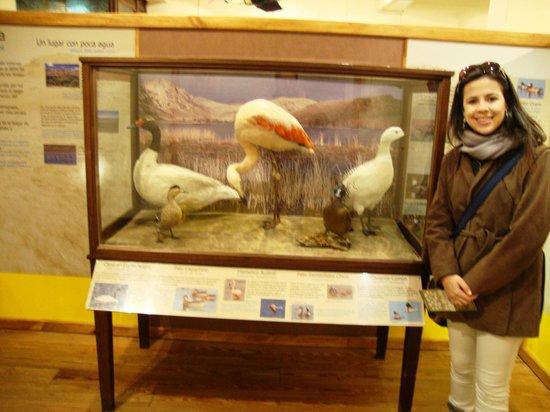 Museo de la Patagonia: Museu