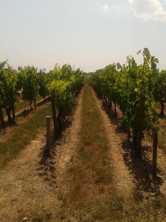 Rendez-vous au Chateau: The wonderful vineyards!