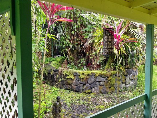 Coconut Cottage Bed & Breakfast : View from bungalow