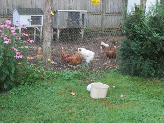 The Inn at Sweet Water Farm : side yard with chicken coup