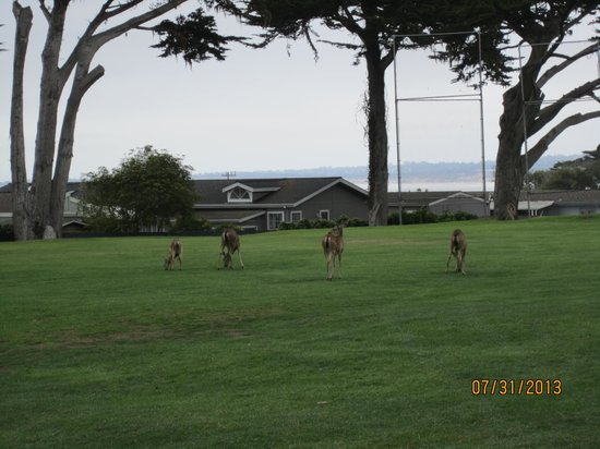 Pacific Grove Municipal Golf Course: Watch out for the wildlife,lol