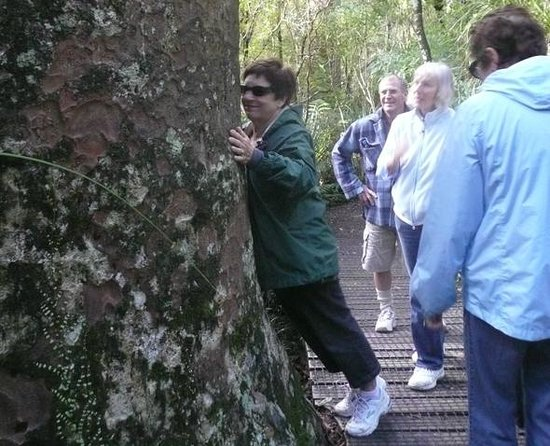Waipoua Lodge: Personalised guided tours to the ancient kauri trees are available with host Ian