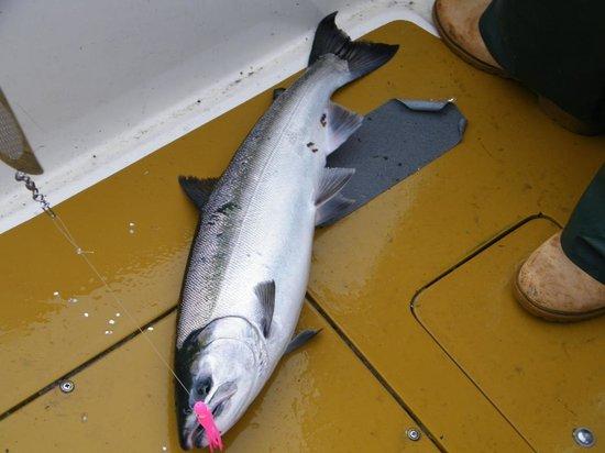 Alaska's Kodiak Island Resort: Nice silver Salmon
