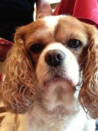 Bridgend House Bed & Breakfast: Molly